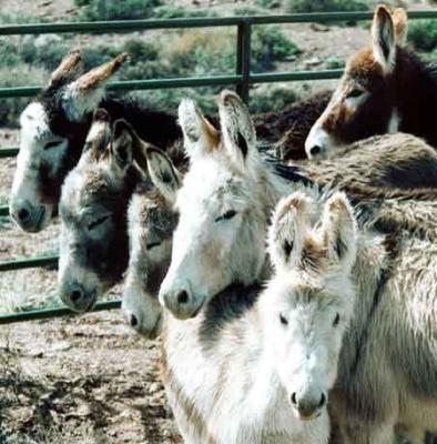 20090812100641-burro-pic.jpg