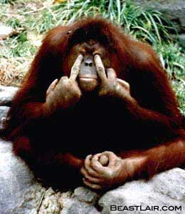 20100313113202-orangutan.jpg