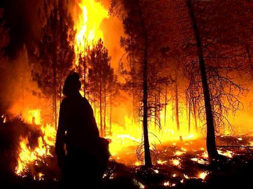 20100820110424-incendio-forestal99.jpg
