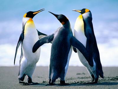 20101220110507-penguins.jpg