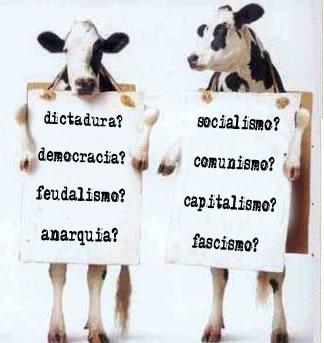 20100325121732-vacas.jpg