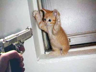 20100426102054-el-gato-y-la-pistola.jpg