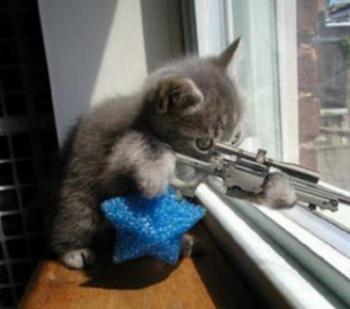 20101216111850-gato-terrorista-01-5-.jpg