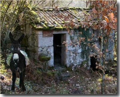 20110322105438-burro42.jpg