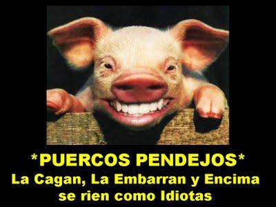 20160419112239-puercos-pendejos.jpg